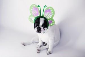 puppy-photo-64658